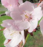 Spring-Blooms-21.jpg