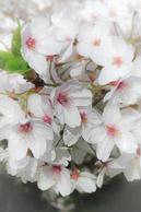 Spring-Blooms-30.jpg