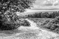 Ashdown Forest, East Sussex, home of Winnie the Pooh