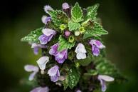 FlowerFlowers14