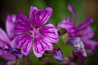 FlowerFlowers15