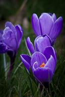 Spring_Flowers-126.jpg