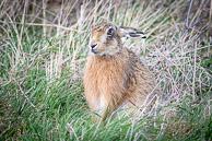 Isle of Sheppey, Kent, West London Birders